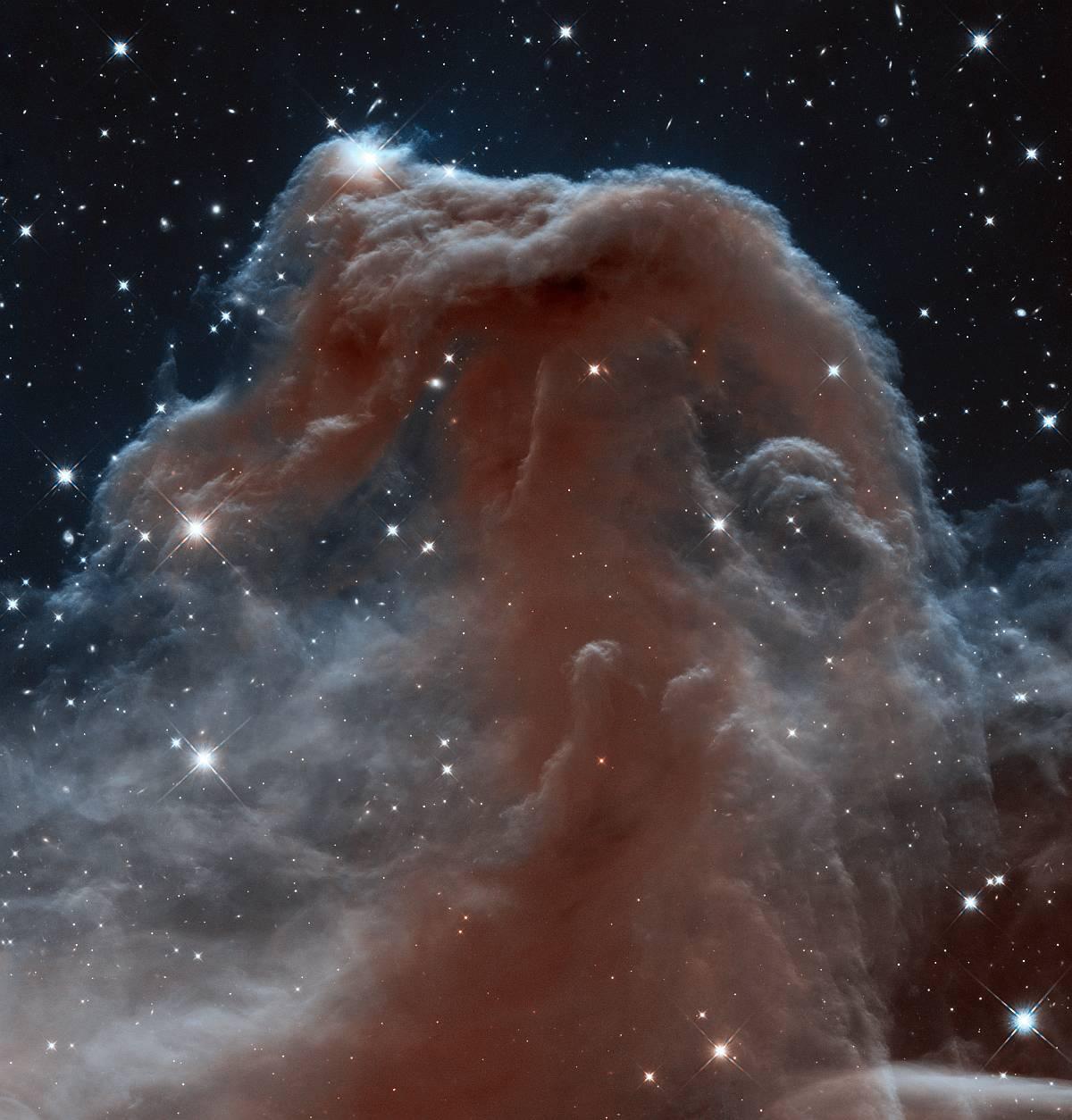 Конская голова, увеличенный фрагмент