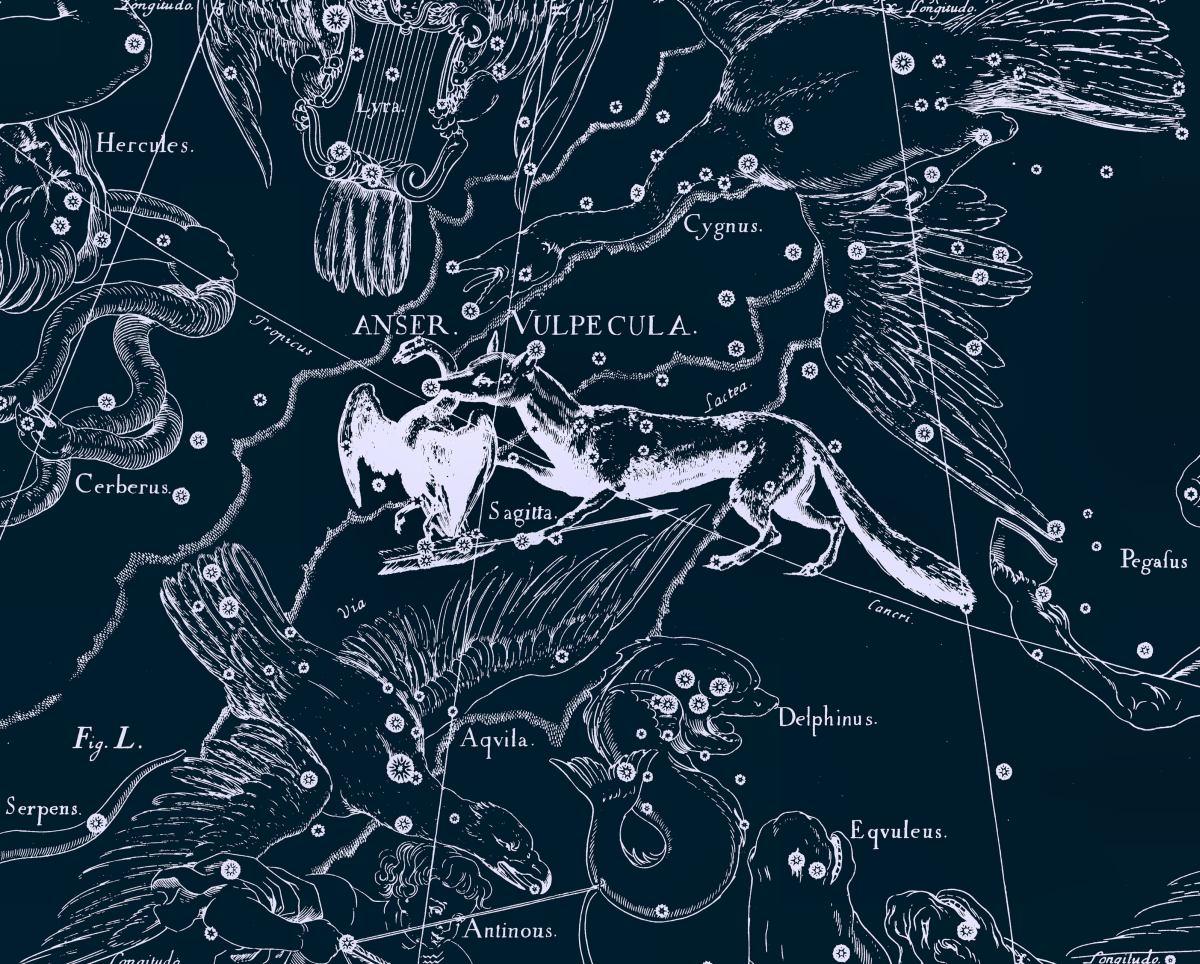Лисичка, рисунок Яна Гевелия из его атласа созвездий