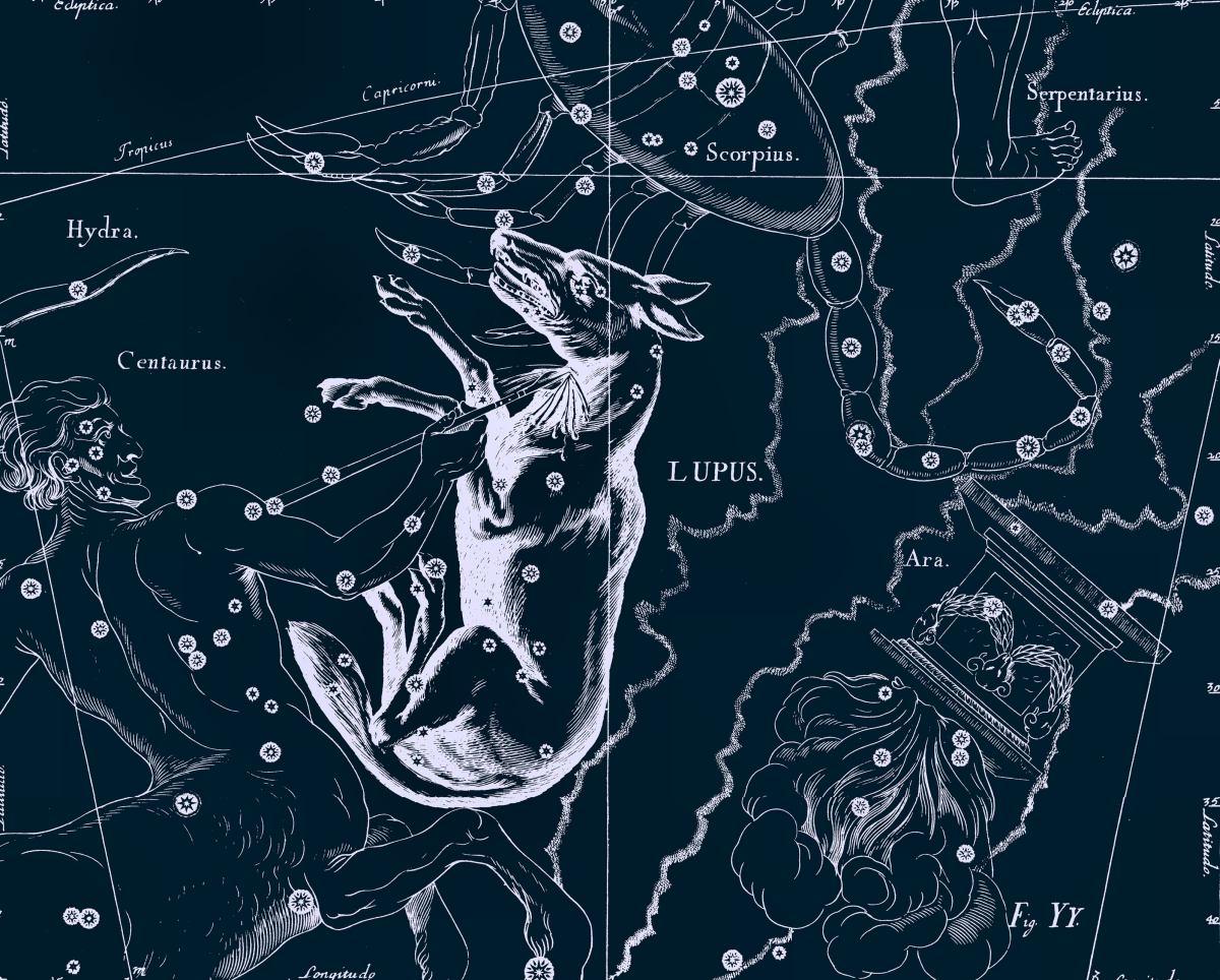 Волк, рисунок Яна Гевелия из его атласа созвездий