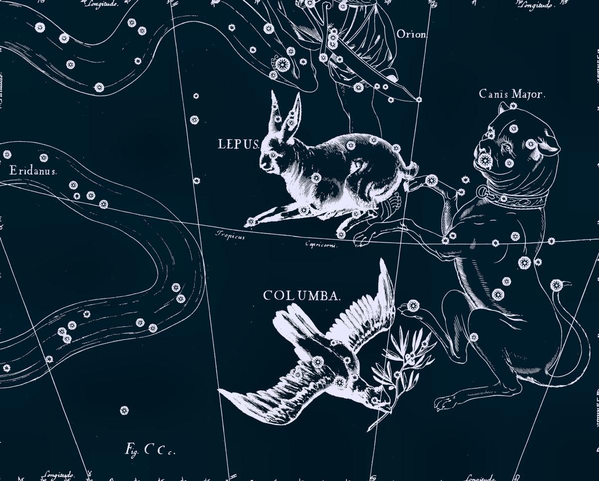 Заяц, рисунок Яна Гевелия из его атласа созвездий