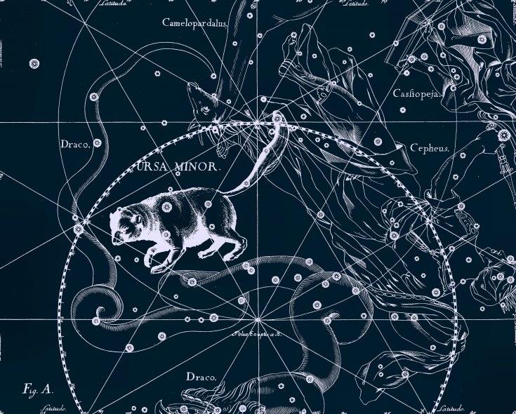 Малая Медвидица. Рисунок из атласа созвездий Яна Гевелия