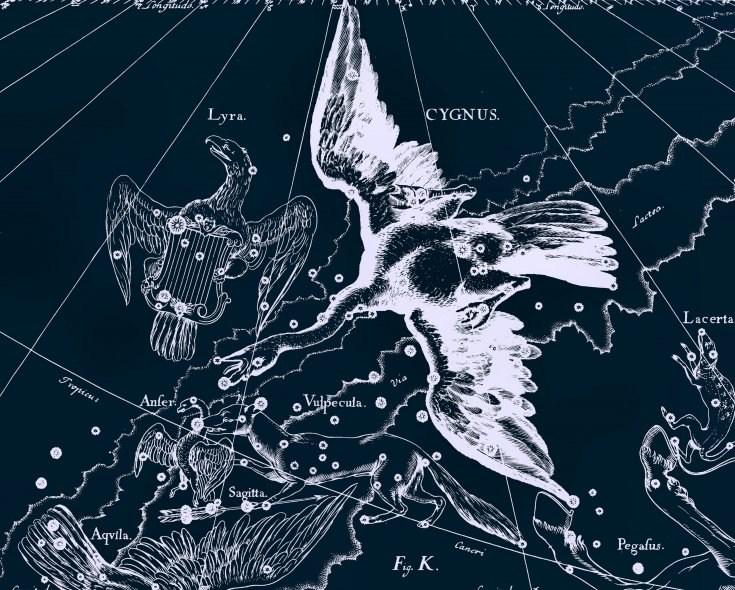 Созвездие Лиры и Лебедя, рисунок из древнего атласа звездного неба Яна Гевелия