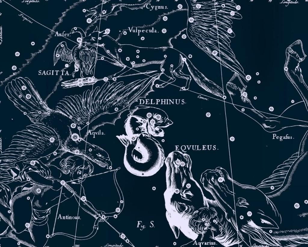Дельфин, рисунок Яна Гевелия из его атласа созвездий