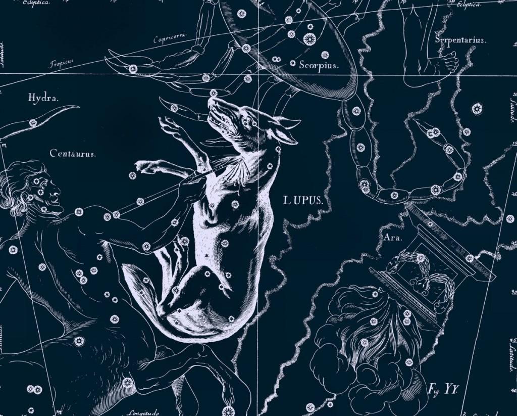 Lupus - Волк