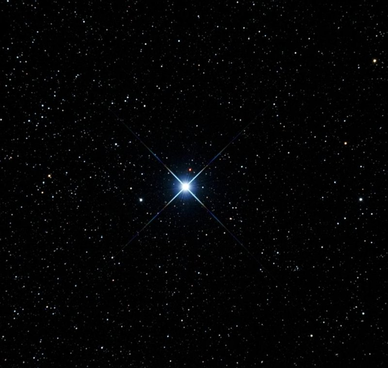Звезда Мимоза
