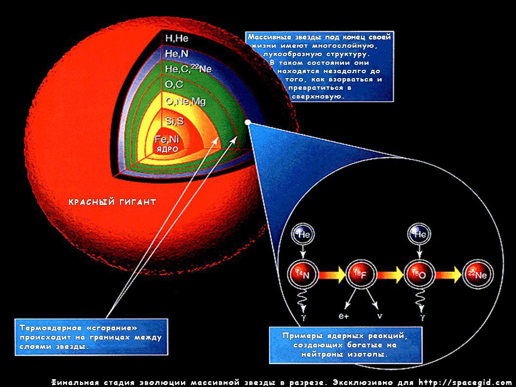 Финальная стадия эволюции масссивной звезды в разрезе