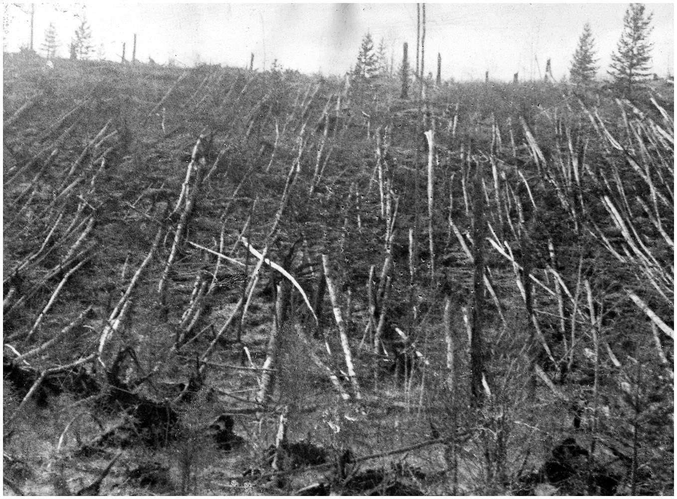 Поваленный лес на месте падения Тунгусского метеорита