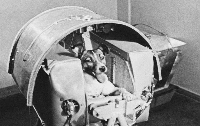 Лайка - первое живое существо на орбите земли
